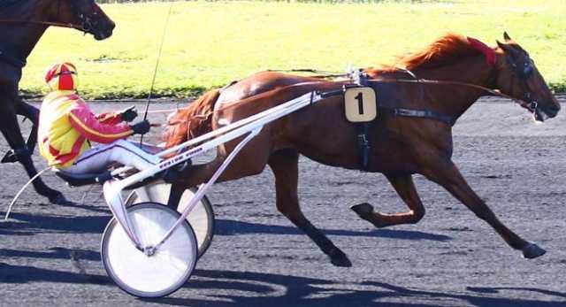 EL GRECO BELLO cheval