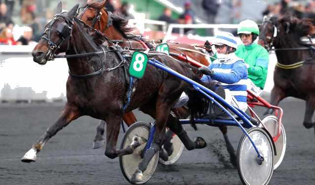 ELVIS DU VALLON cheval