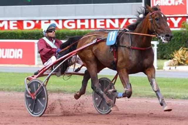 ENZO D'ESSARTS cheval