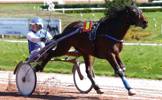 FALCO D'HAVAROCHE cheval