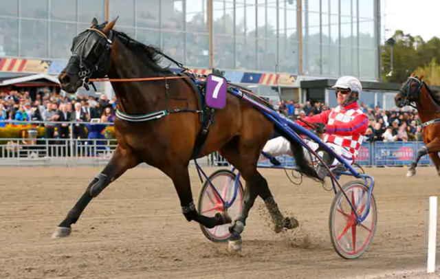 FALCON AM cheval