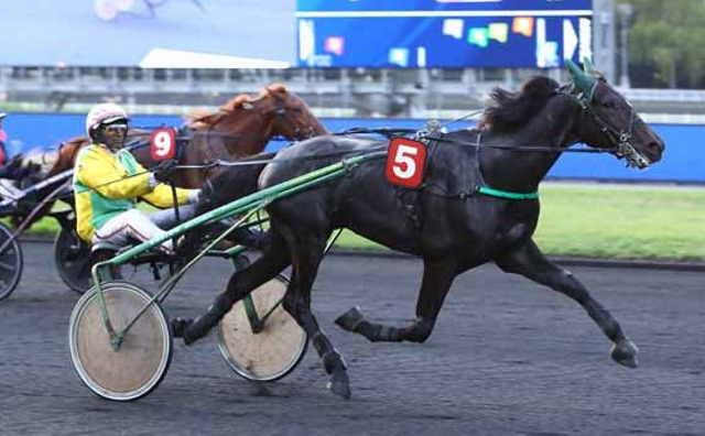 GAMAY DE L'ITON cheval