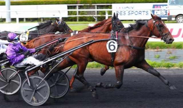 GAVROCHE MAZA cheval