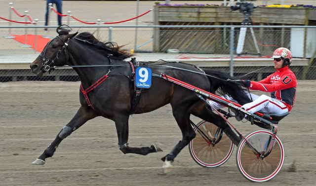 SANDSJONS ENZO cheval