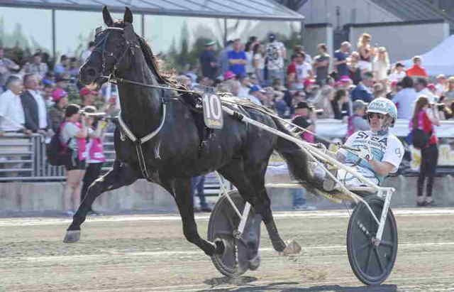 SORBET cheval
