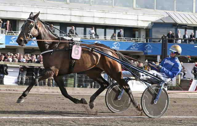 TJACKO ZAZ cheval