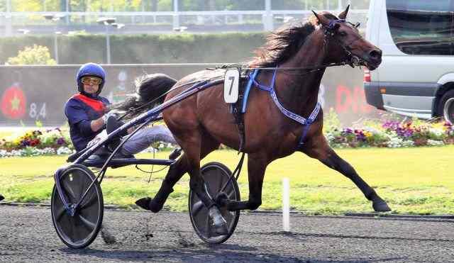 VALOKAJA HINDO cheval