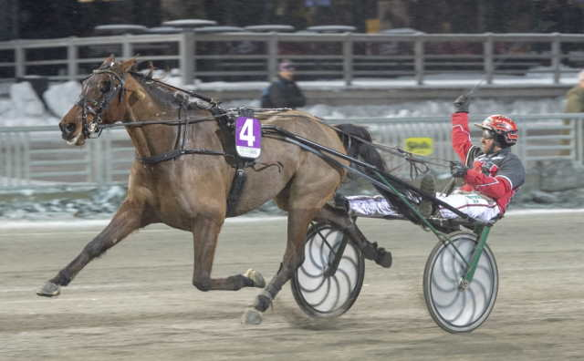 WIND KNIGHT cheval