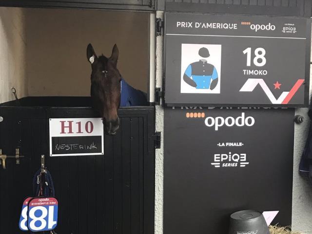TIMOKO attend sagement dans son box le départ du PRIX D'AMÉRIQUE 2017